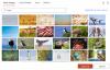 【速搜资讯】微软宣布向Microsoft 365订阅用户提供免费商用授权的视频素材库