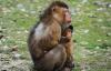 【速搜资讯】人类多久灭绝?哺乳动物平均繁衍寿命100-200万年