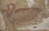 【速搜资讯】印尼发现已知世界最古老洞穴壁画:4万多年前的野猪