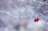 【速搜资讯】专家谈春节为何不能像国庆一样流动:冬季寒冷适合病毒的生存