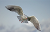 【速搜资讯】女子车内隔空喂食海鸥 下一秒挡风玻璃被啄裂