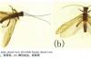 【速搜资讯】新物种以胡歌古天乐命名!网友:虫子都变帅了