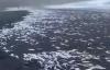 【速搜资讯】地震前几小时 日本海岸边现大量死鱼:绵延数百米