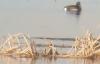 【速搜资讯】极危物种青头潜鸭首次现身云南腾冲 被喻为水中大熊猫