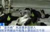 【速搜资讯】西班牙两船牛海上漂泊近3个月:担忧传染蓝舌病病毒