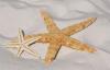 青岛入侵海星已供不应求:收购需预约 网友直呼太能吃