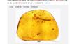 """【速搜资讯】亿万年前""""大角怪""""首次亮相!中国科学家发现昆虫新物种"""