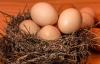 【速搜资讯】熟蛋返生孵鸡论文引热议 期刊回应:正常审核不会通过!