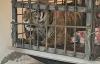 【速搜资讯】闯村伤人老虎被命名完达山1号:体重450斤、雄性2-3岁