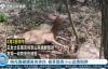 【速搜资讯】女孩拍了1年水坑竟拍出动物大片 走红后续却出人意料