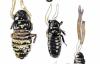 """【速搜资讯】日本人发现了长在蟑螂身上的""""冬虫夏草"""""""