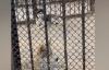 【速搜资讯】动物园回应狼圈养哈士奇:情况属实、还和狼生了个串