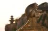 【速搜资讯】世界上最高龄猕猴获吉尼斯纪录认证!年龄接近人类120岁