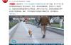 【速搜资讯】5月1日起遛狗不拴绳违法:养犬管理力度加大、处罚越来越重