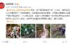 """【速搜资讯】杭州发现罕见幽灵草:神似""""豌豆射手"""""""