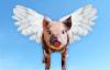 """【速搜资讯】猪肉价格跌回10元时代 """"猪茅""""牧原跌停:2个月损失近2000亿"""