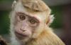 【速搜资讯】人-猴嵌合体:培育人类器官又向前跨越一小步