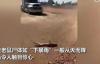 【速搜资讯】澳大利亚遭遇严重鼠患:老鼠尸体暴雨式从天而降 让人惊叹