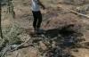 【速搜资讯】海南42头牛遭雷击死亡:有的上千斤 损失30多万