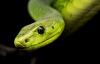 【速搜资讯】女子被蛇打呼噜吵醒:以为是丈夫 床头靠背抓出一条大蛇