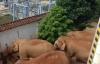 【速搜资讯】云南象群进村民家拧开水龙头喝水 目前已掉头往西南迁移