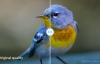 【速搜资讯】即日起谷歌结束无限高画质图片备份服务 谷歌相册将执行按存储量收费政策
