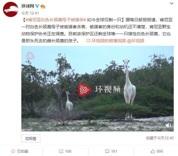 白色长颈鹿母子被盗猎者杀害 全球仅剩一只