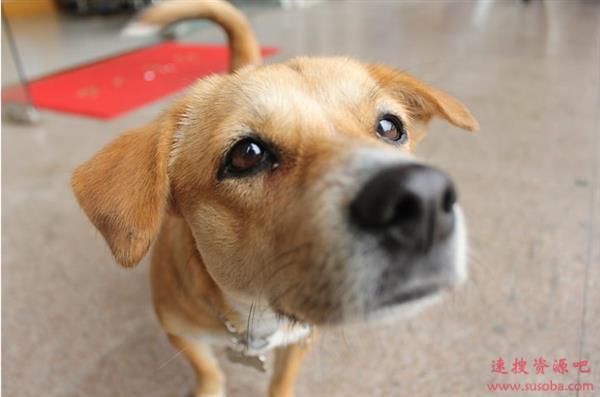 全球首只新冠病毒测试阳性的宠物狗死亡 活了17岁