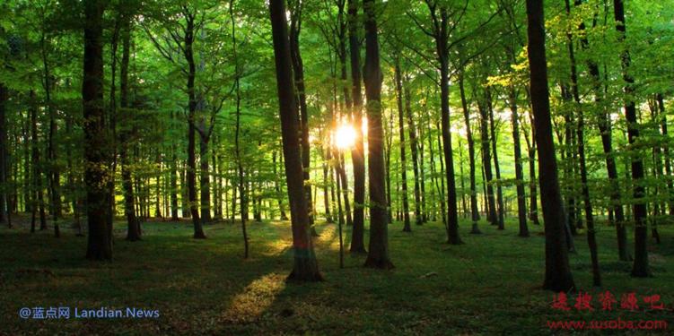 使用这款绿色搜索引擎你将可以拯救地球 要不要为拯救地球出份力?
