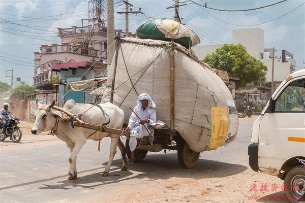 印度小伙自创牛尿牛粪疗法预防新冠肺炎:这是灵丹妙药