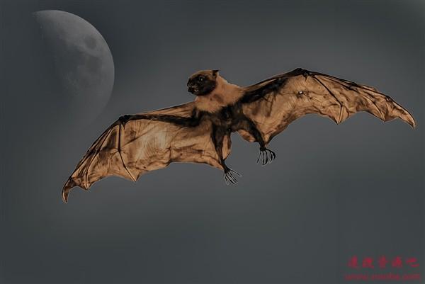 """吸血蝙蝠竟然用带血的""""法式舌吻""""来交朋友"""