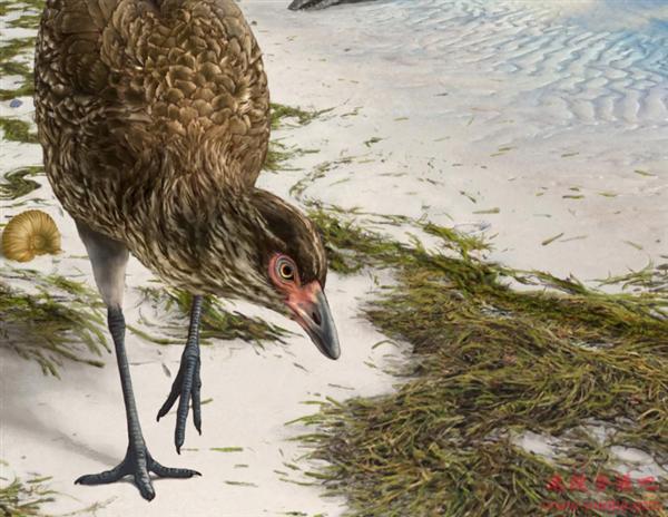 """新发现:恐龙灭绝前夕一只""""神奇的鸡""""化石 揭示现代鸟类的起源"""