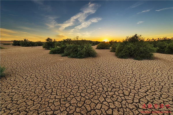 大自然才是最佳气候危机解决方案 土壤每年可吸收55亿吨碳