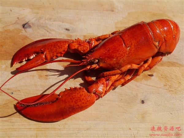 吃货们当心了:龙虾体内发现塑料