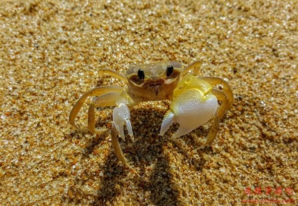 海洋生物:为人类阻挡了数百万病毒