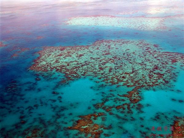 海洋奇观生存堪忧!世界最大珊瑚礁群迎来最广泛白化