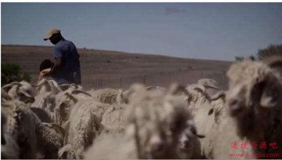 山羊、木瓜检测出新冠病毒阳性:坦桑尼亚总统震怒