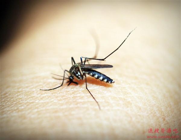 人类第一杀手有望消除!通过基因驱动让蚊子只产生雄性后代
