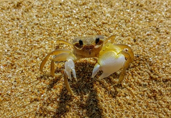 长江岸边突现数万螃蟹 吃货网友:蒸还是炸