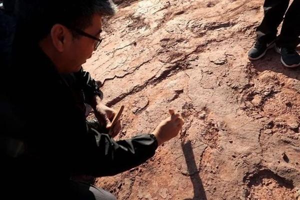 【速搜资讯】福建上杭首次发现恐龙足迹群:距今8000万年