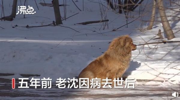 【速搜资讯】主人去世狗狗原地守候5年 网友:真是让人泪目