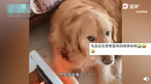 【速搜资讯】狗狗靠着电暖气取暖毛被烤焦!网友:差点真成热狗啦