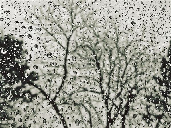 【速搜资讯】今日谷雨:全国多地中到大雨 局部暴雪
