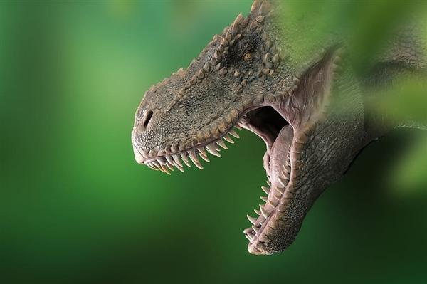 """【速搜资讯】福建发现""""恐龙舞池"""":200多枚足迹挤在一起"""