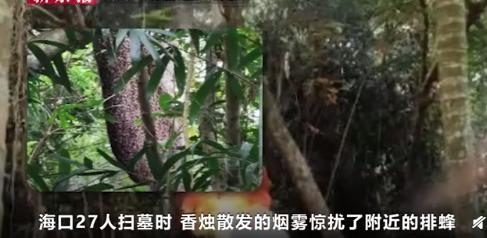 【速搜资讯】海南蜜蜂清明节蜇人致1死26伤:专家支招被蜇伤如何急救处理